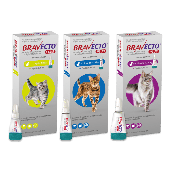 Bravecto Plus Spot-On for Cats